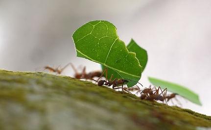 食物的动物:蚂蚁