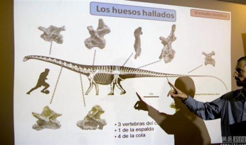 龙化石:等于14头大象