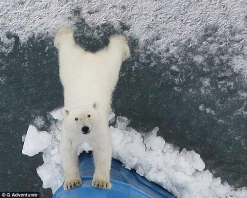 萌之对决:全球5大最搞笑动物自拍照出炉