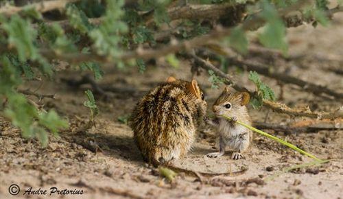 动物世界的母子温馨时刻
