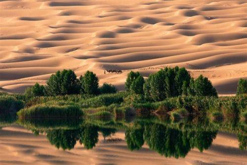 量:新疆沙漠变绿洲