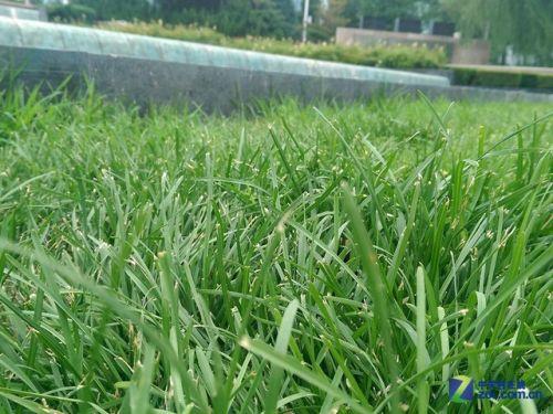 壁纸 草 绿色 植物 桌面