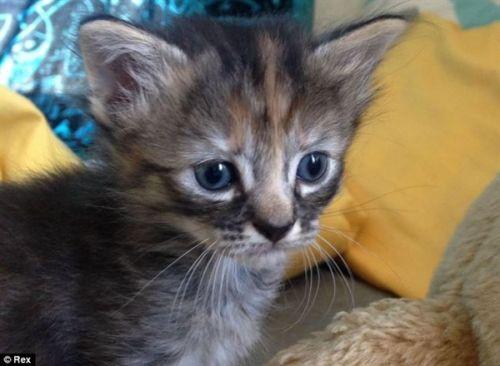 绰号最忧伤小猫图片爆红网络无比悲伤猫_业撑了吃表情表情包图片