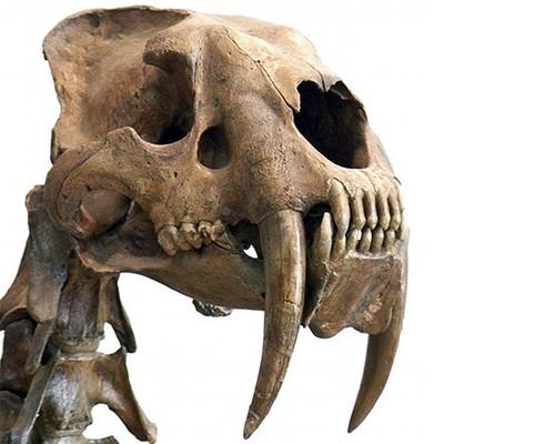 灭绝动物复活 侏罗纪公园不是梦