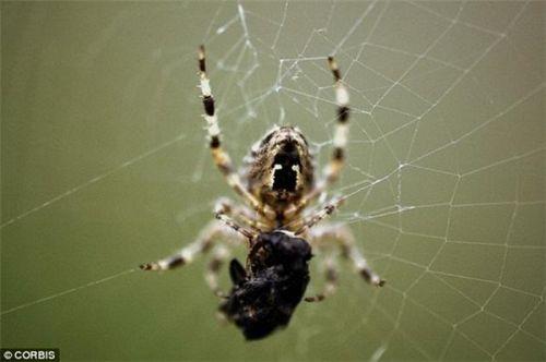 全球变暖将带来巨型蜘蛛 元器件交易网图片