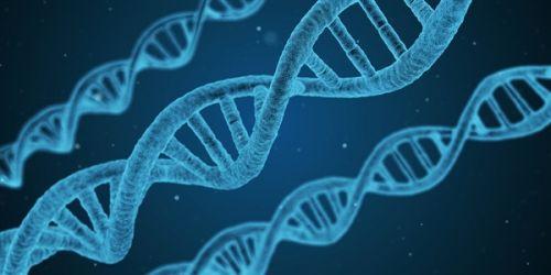 疯狂打call 世界首例体细胞克隆猴中国诞生0