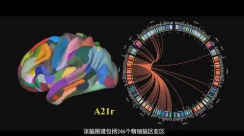 """还不知道""""类脑智能""""是啥?那可是AI的终极目标!4"""
