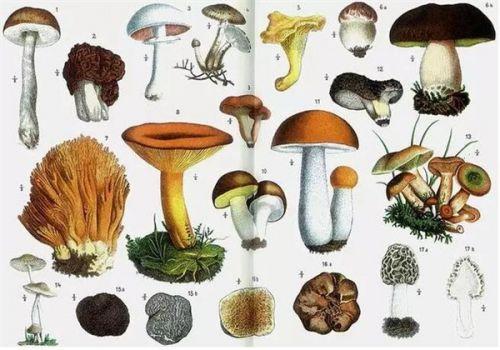 一种饥饿的真菌 能拯救世界也能毁灭世界0