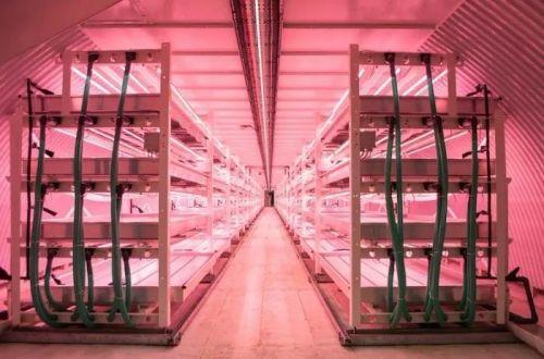 中科生物扩建植物工厂,种植技术再升级1