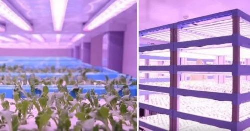 中科生物扩建植物工厂,种植技术再升级0
