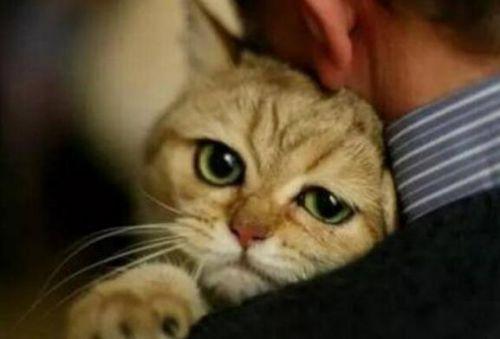 加密猫宣布与HTC合作 两个过气网红再掀风浪?0