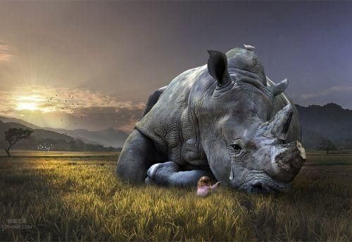 物联网和人工智能如何保护野生动物免受偷猎者伤害0