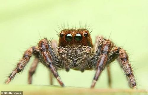 汽车变身蜘蛛侠?当蜘蛛传感器植入自动驾驶汽车外壳1