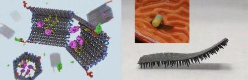 肉眼不可见的微型机器人来了,一次制造100万个,未来可探索大脑0